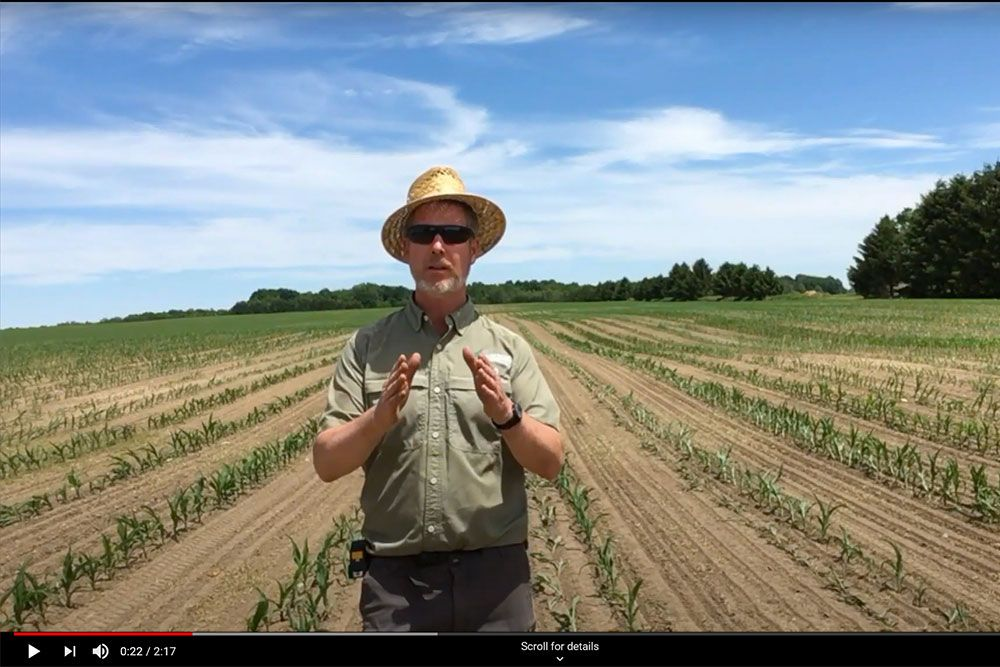 Ross Wilson updates us on the #60inchcorn cover crop project in second video.